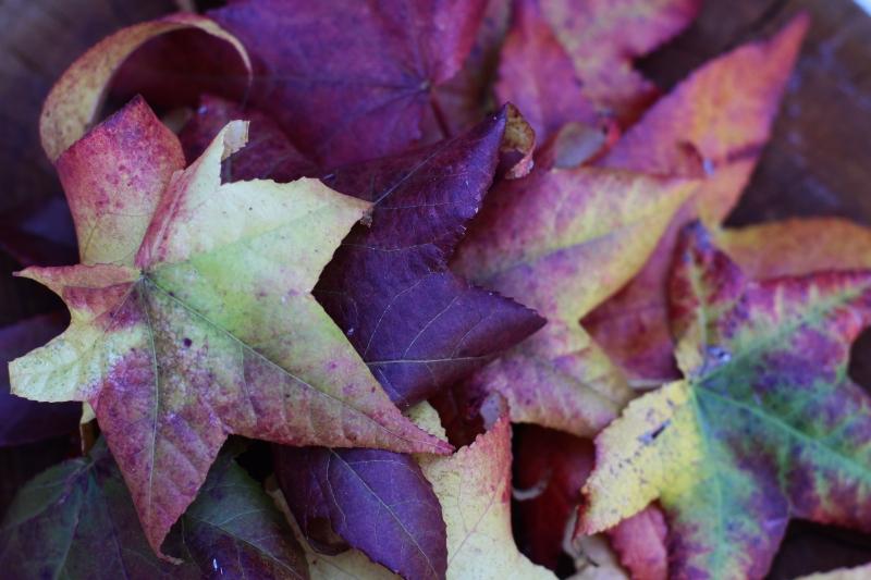 Autumn leaves 1 resized