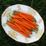 carrots2 resized square