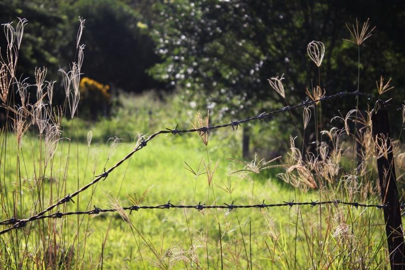 bush scene1 resized