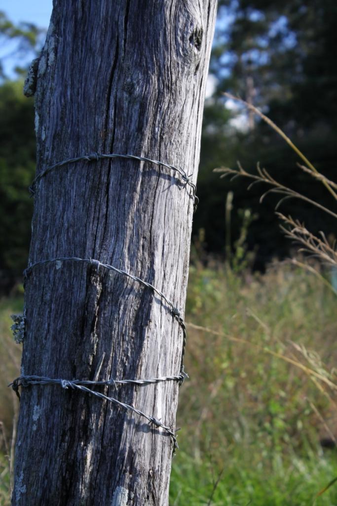 bush scene4 resize